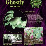 Gallery-Poster-Ghostly-Plants-900
