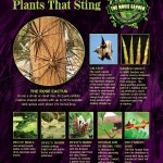 Gallery-Poster-Plants-That-Sting-900