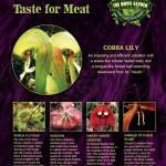 Gallery-Poster-Plants-with-a-Taste-for-Meat-900